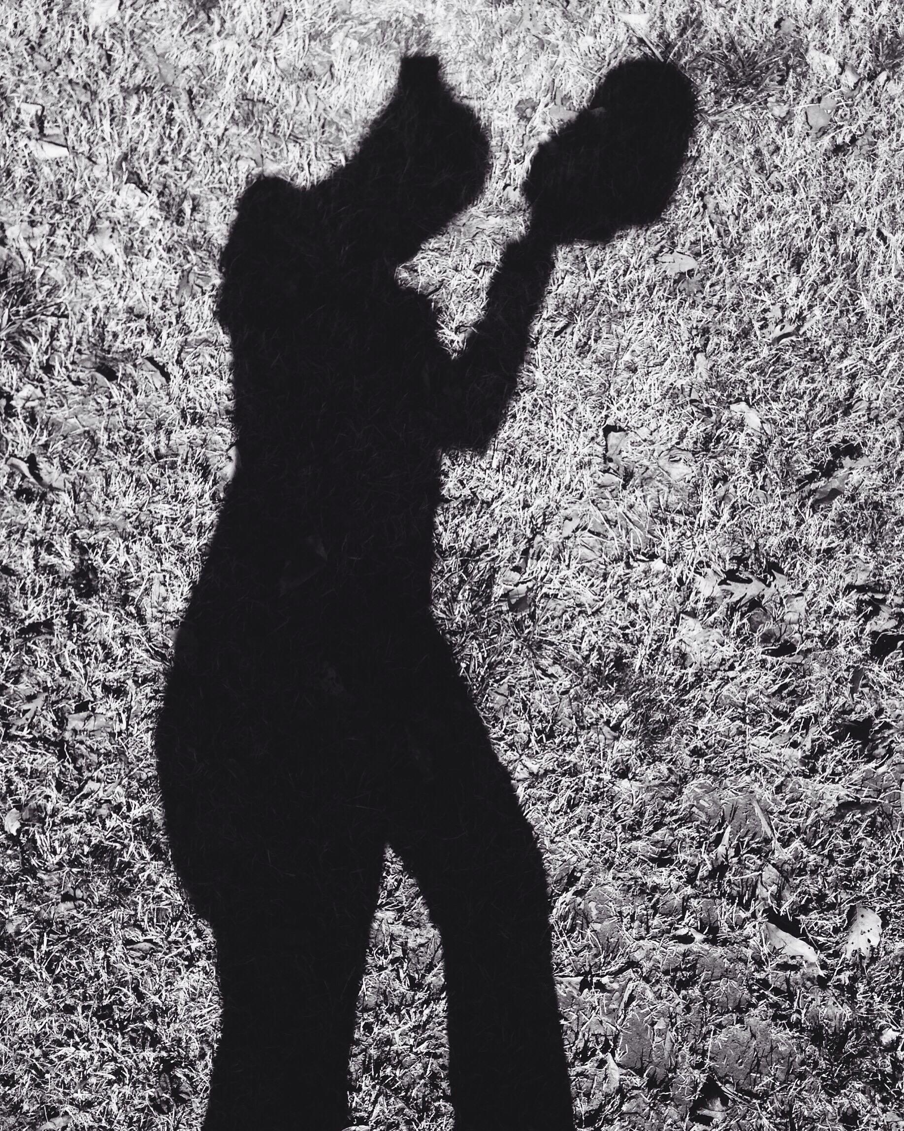shadow photography dogwood 52